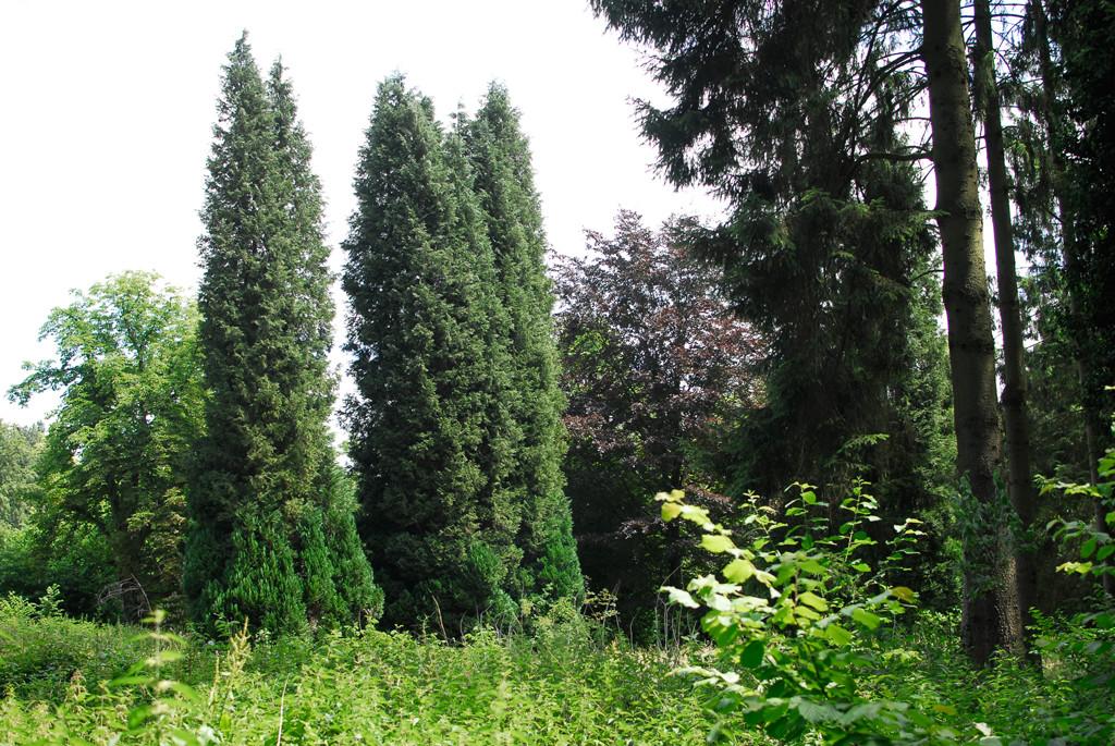 groenaanleg zorgsector