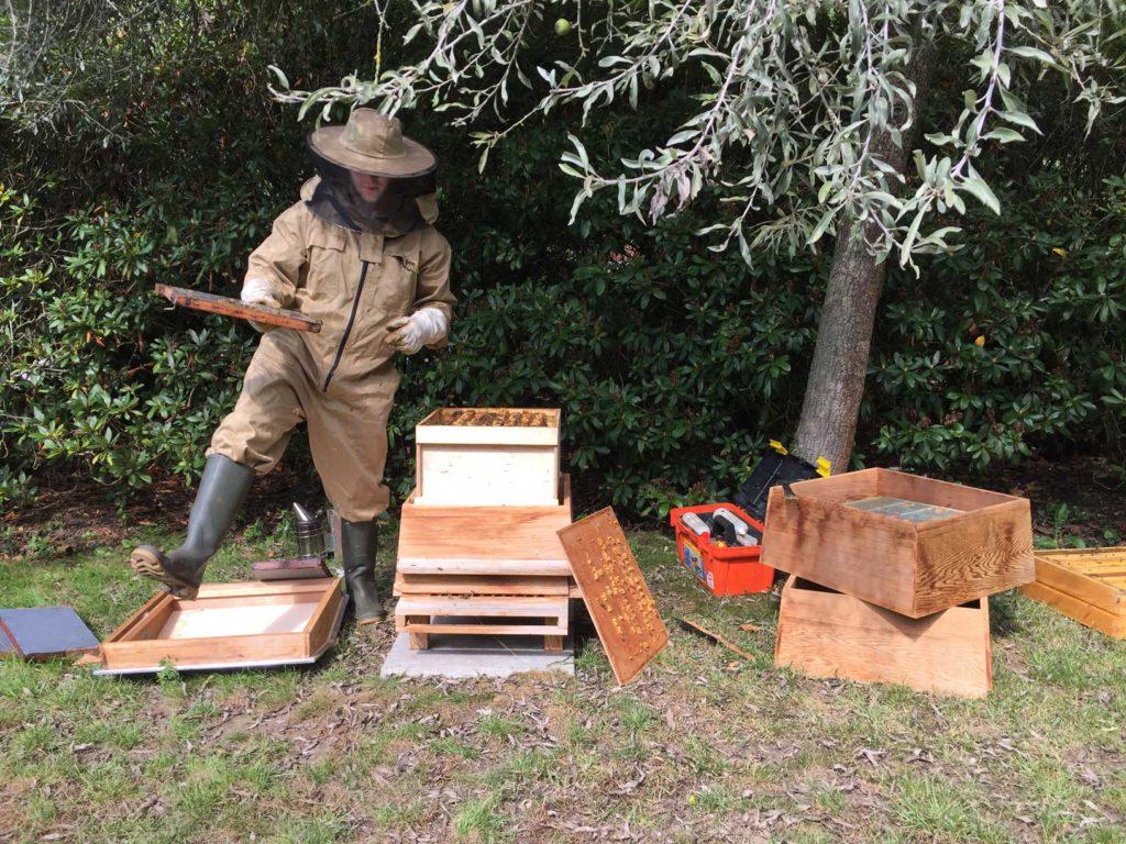 De imker haalt de honingraten uit de bijenkast