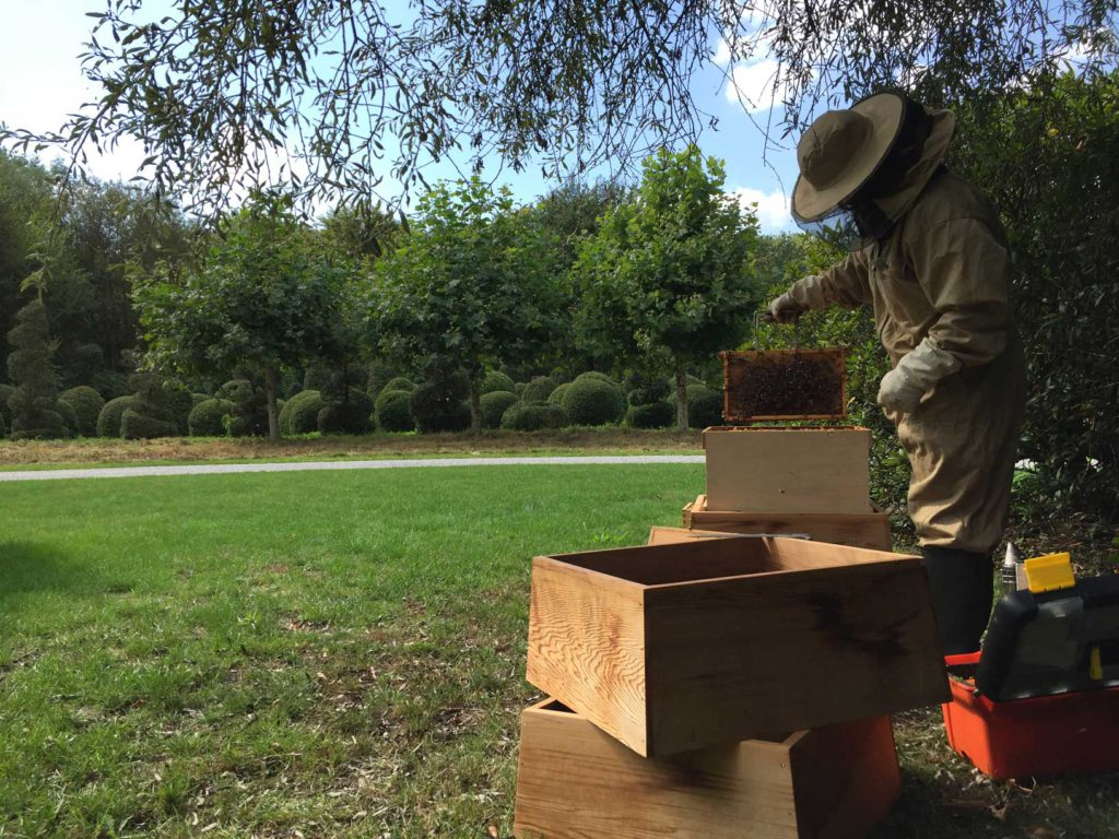 bijen in de tuinen van Avantgarden