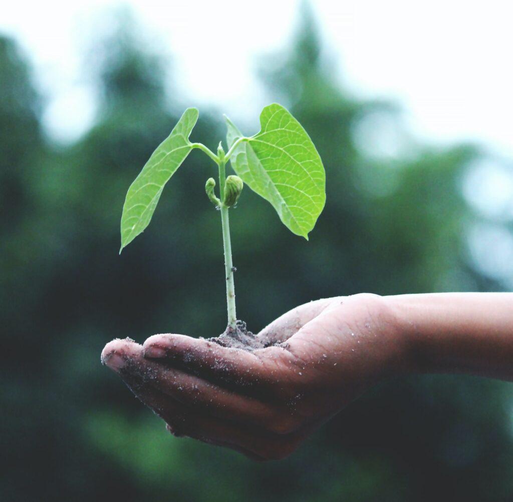 Tuinman verzorgt plant